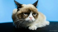 The Internet-Famous Grumpy Cat